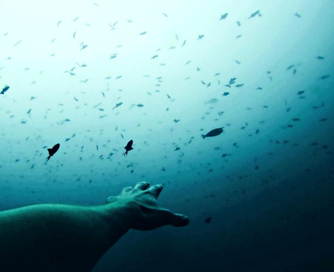 水中で光の方に手を伸ばす