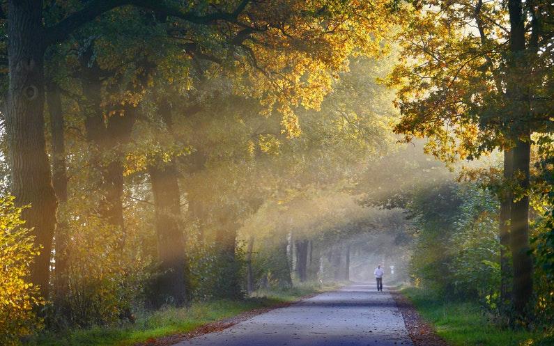 日が差す秋の道